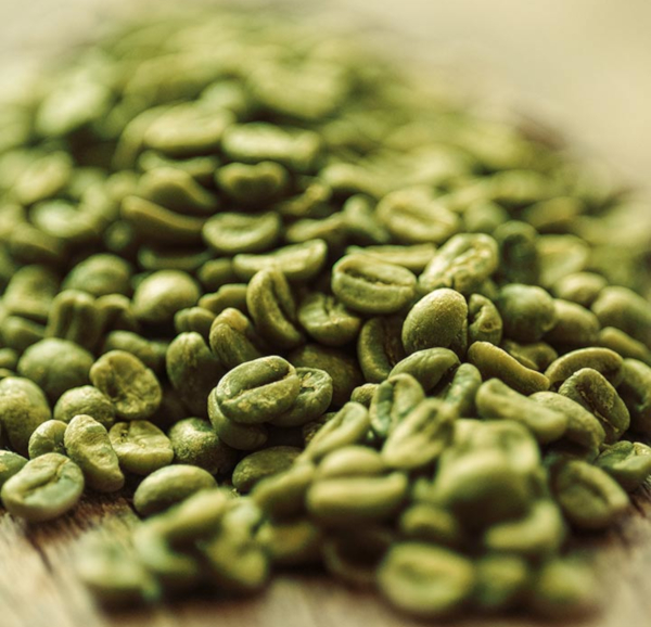 Green coffee bean extract as a fat burner