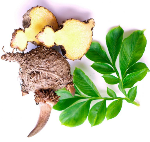 Glucomannan root for appetite