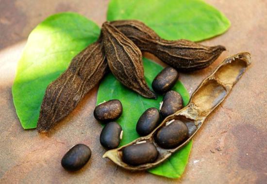 Mucuna Pruriens seed